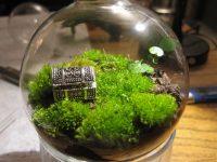 Minyatür Bahçe Teraryum Bakımı ve Özellikleri