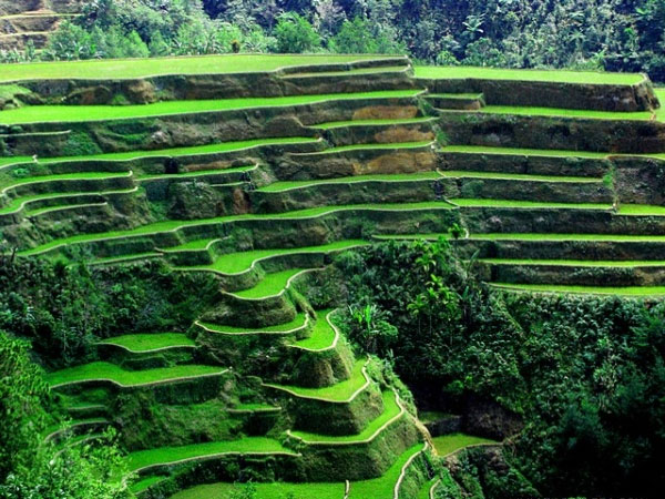 Banaue Pirinç Tarlaları- Filipinler