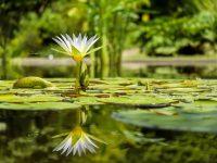 Teraryum Bitkileri Nelerdir?