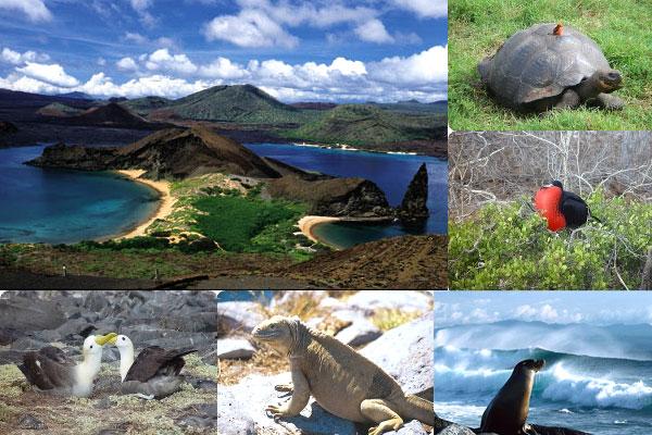 Galapagos Adaları- Ekvator