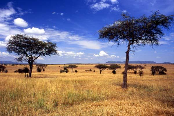 Serengeti Milli Parkı – Tanzanya