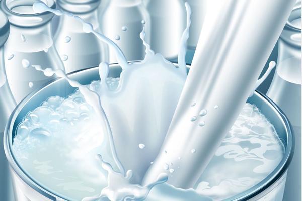 sütün faydaları